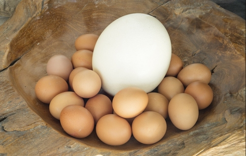 Large-Ostrich-egg-chicken-eggs